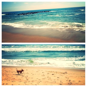 Beautiful Beach and a Pup Excited about Exercising